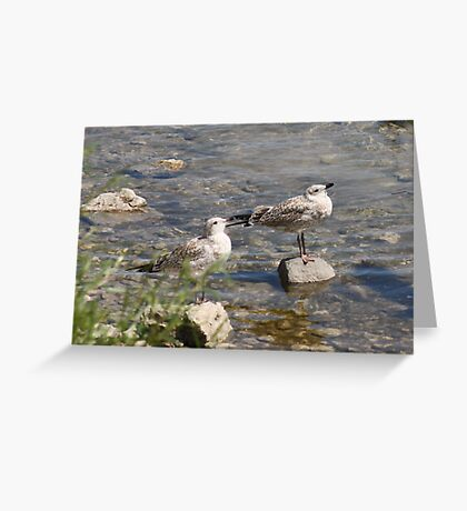 Seagulls Sunning Greeting Card