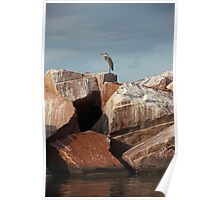 Great Blue Heron on Red Rock Poster