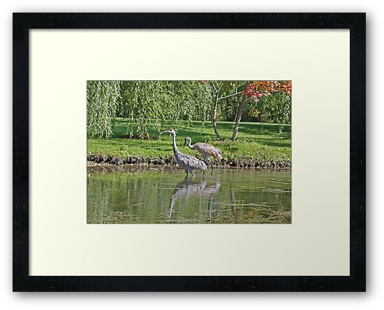 Sandhill Cranes Wading by Thomas Murphy