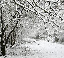 Snowy track by Jane Corey