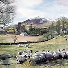 Sheep in Glen Clova Angus by Joyce Grubb
