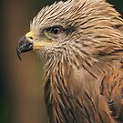 Power Bird I by Katayoonphotos