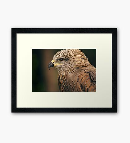 Power Bird I Framed Print