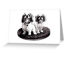 Shih tzu dogs - prints Greeting Card