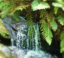 Leura Cascades by Sally Haldane