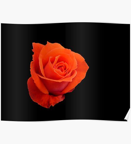 Rose on black Poster