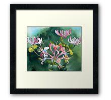 Honeysuckle Watercolor Framed Print