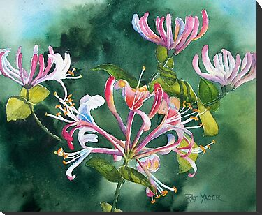 Honeysuckle Watercolor by Pat Yager