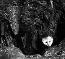 Opossum Peekaboo by James2001