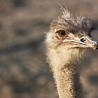 South African Ostrich by Dominika Aniola