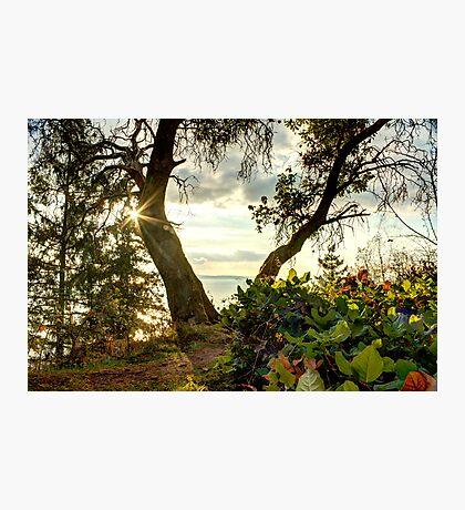 Wishbone Photographic Print