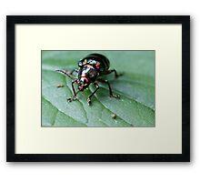 Opalistic Beetle Framed Print