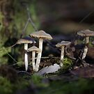 Sugar coated fungi! by fungifun