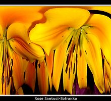Exotic Orange Lilies - Polar Co-ordinate Special Effect by Rose Santuci-Sofranko