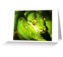 Python-itis. Greeting Card
