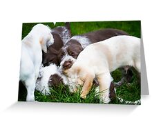 Orange & White & Brown Roan Italian Spinone Puppy Dogs Greeting Card