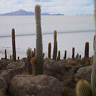 Salar de Uyuni, Bolivia by Louise Crutchfield