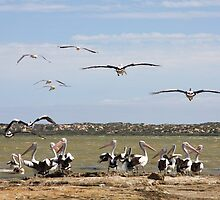 Pelican Point - The Coorong, South Australia by Ruth Durose