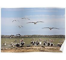 Pelican Point - The Coorong, South Australia Poster