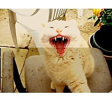 And then I Laughed BIG time Photographic Print