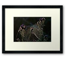 Spinweb Framed Print