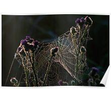 Spinweb Poster