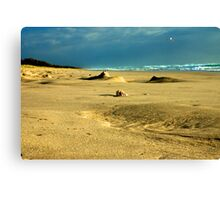 Shell Sand Seagull Canvas Print