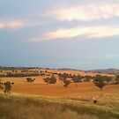 Cootamundra Landscape by Joan Wild