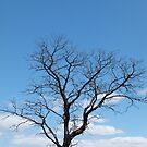 Skeleton and Big Sky by DEB CAMERON