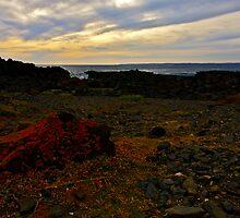 Summerlands Low Tide by Shaynelee