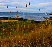 The Tall Sea Grass by Lee Harvey