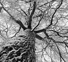 Tree by Sergey Martyushev