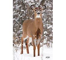 Handsome Young Buck Photographic Print