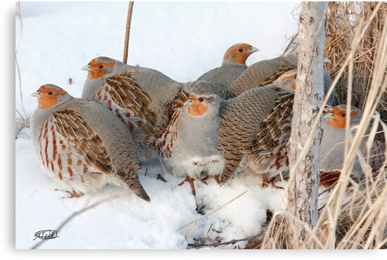 The Partridge Family by Todd Weeks