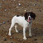 Cody's Day At The Beach by BizarreBeff