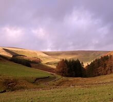 Hills Near Walkerburn by Ian Porter