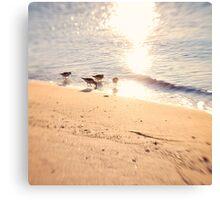 4 Little Birds Canvas Print