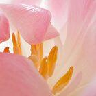 Tulip Curl by Ann Garrett