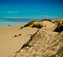 Blue above the Dunes by Dale Stillman