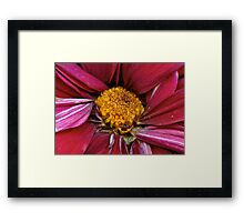 Flower - At the center of it all Framed Print