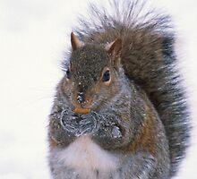 Grey Squirrel in Winter by Bill Spengler
