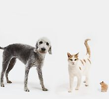 Family of Pets by Andrew Bret Wallis