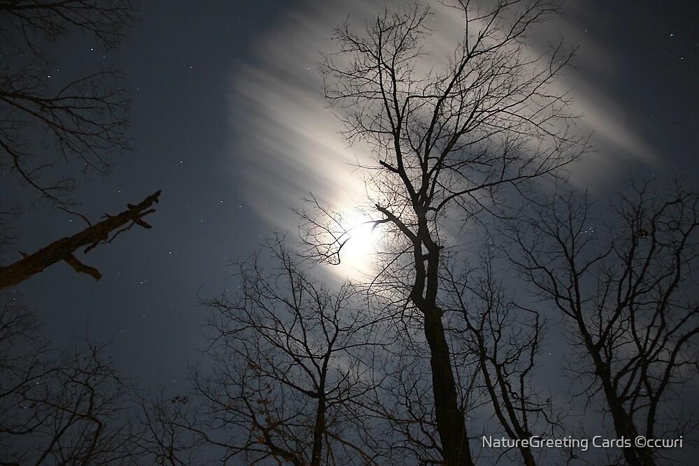 Stary, Stary January Night by NatureGreeting Cards ©ccwri