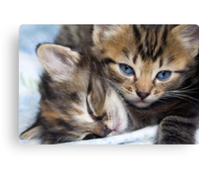 Snuggle Buddies Canvas Print