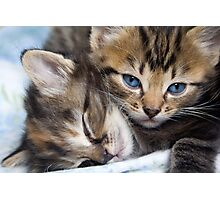 Snuggle Buddies Photographic Print