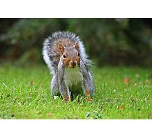 A beautiful Squirrel.. Photographic Print