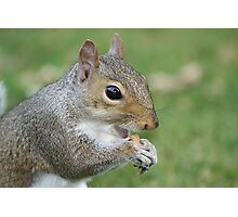 A little Squirrel eating.. Photographic Print