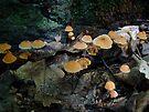 Marasmius Mushrooms Colony by MotherNature