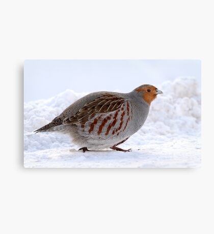 On The Move / Gray Partridge Canvas Print