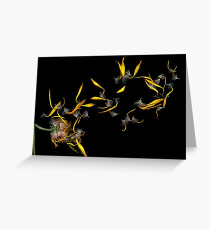 Flower - Daisy - Gone with the wind Greeting Card
